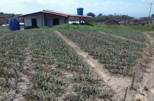 Terreno En Venta En Paso Real, Parroquia Diego Lozada, Venezuela, VE RAH: 17-8409