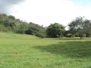 Terreno En Venta En Valencia, Hato Royal, Venezuela, VE RAH: 17-10152