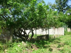 En Venta En Maracay - El Limon Código FLEX: 18-11696 No.5