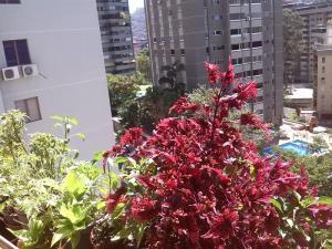 Apartamento En Venta En Caracas - Terrazas del Avila Código FLEX: 19-1522 No.5