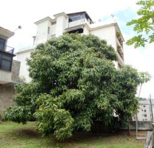Terreno En Venta En Caracas - Colinas de Bello Monte Código FLEX: 19-4426 No.6