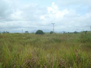 Terreno En Venta En Tacarigua - Tacarigua Código FLEX: 19-4928 No.8