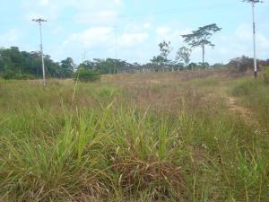 Terreno En Venta En Tacarigua - Tacarigua Código FLEX: 19-4928 No.9
