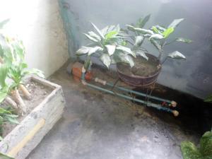 Casa En Venta En Maracay - San Ignacio Código FLEX: 19-5893 No.14