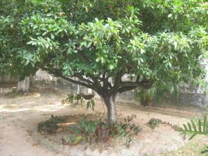 Casa En Venta En Maracay - El Castano (Zona Privada) Código FLEX: 19-5511 No.5