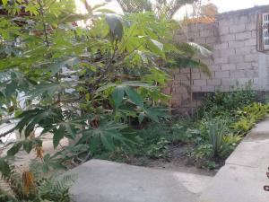 Casa En Venta En Maracay - El Limon Código FLEX: 19-8764 No.8