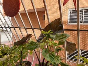 Apartamento En Venta En Caracas - Las Acacias Código FLEX: 20-2757 No.14