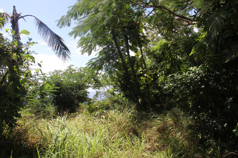 Land for Sale at 43A Lindberg Bay SS 43A Lindberg Bay SS St Thomas, Virgin Islands 00802 United States Virgin Islands
