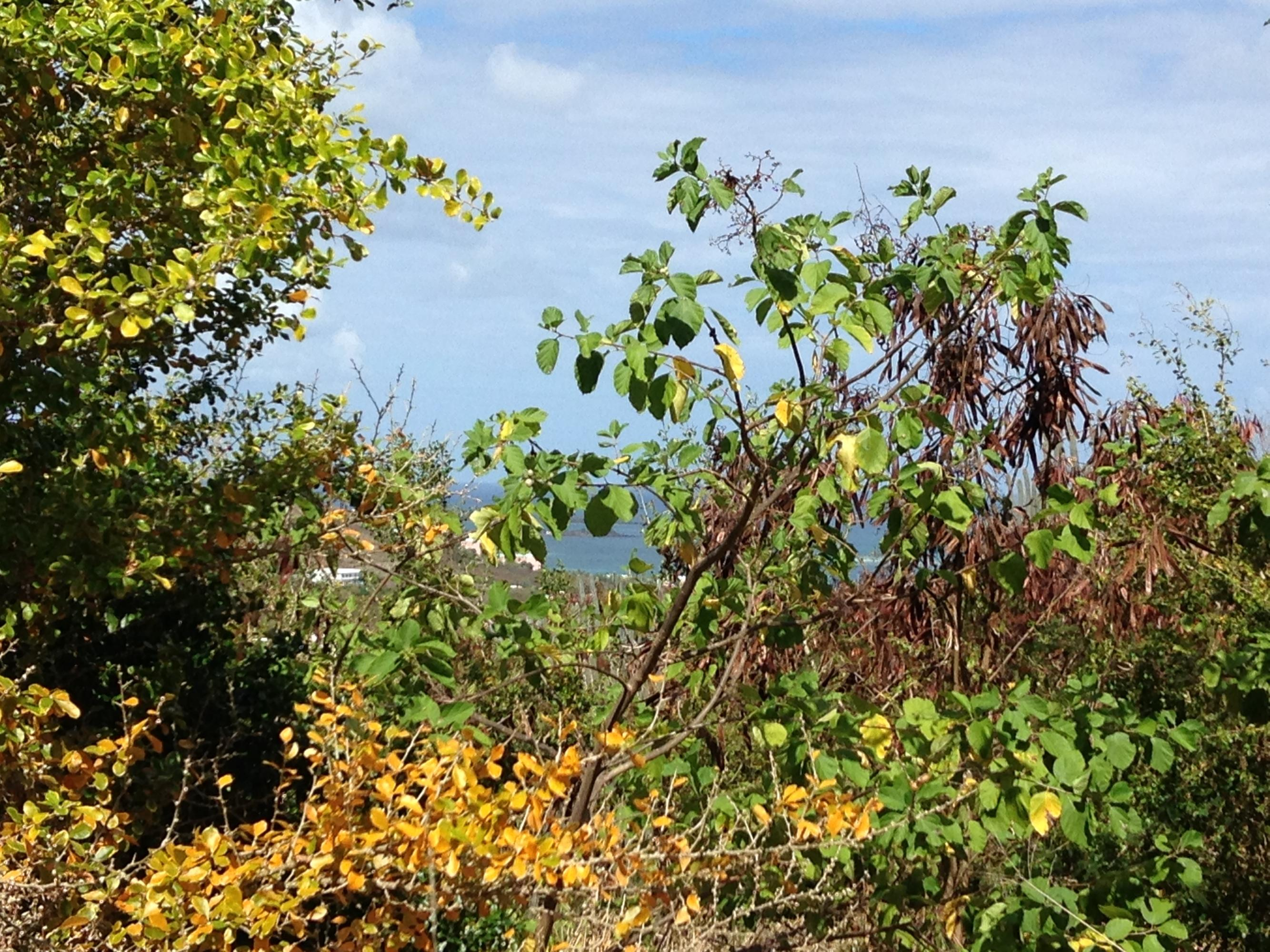 Additional photo for property listing at 226 Cotton Valley EB 226 Cotton Valley EB St Croix, Virgin Islands 00820 United States Virgin Islands