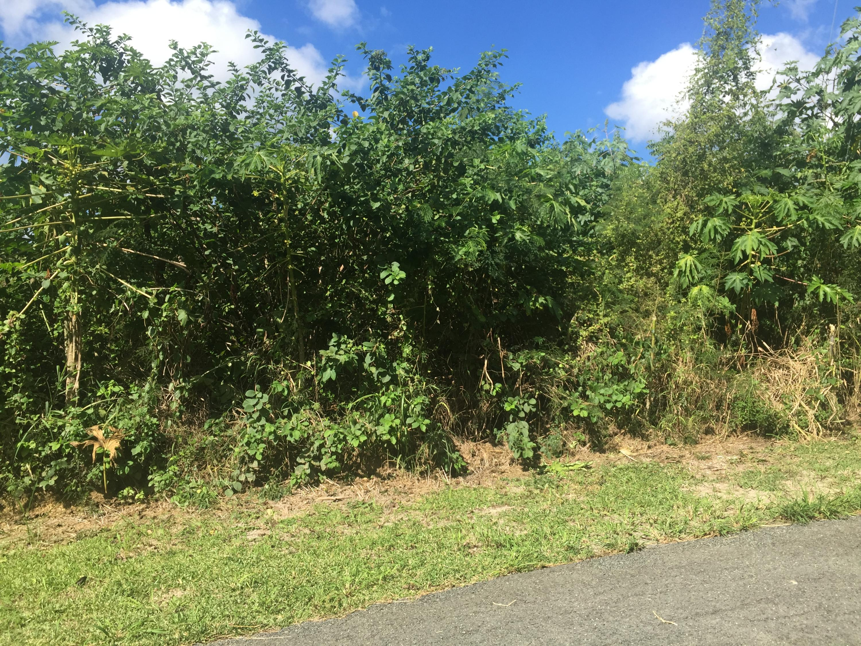 Land for Sale at 214 Mary's Fancy QU 214 Mary's Fancy QU St Croix, Virgin Islands 00820 United States Virgin Islands