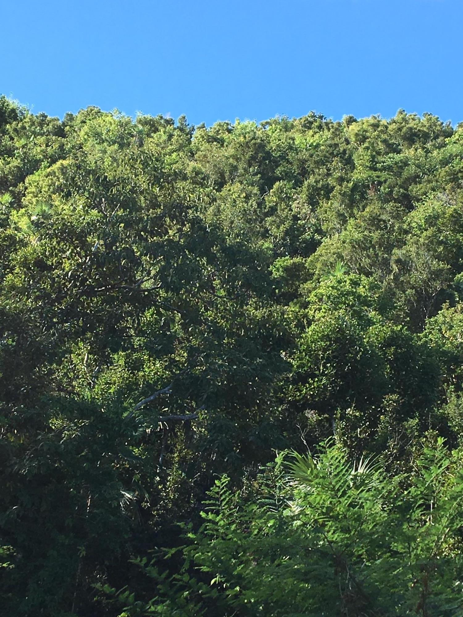 Land for Sale at 11-4 Botany Bay WE 11-4 Botany Bay WE St Thomas, Virgin Islands 00802 United States Virgin Islands