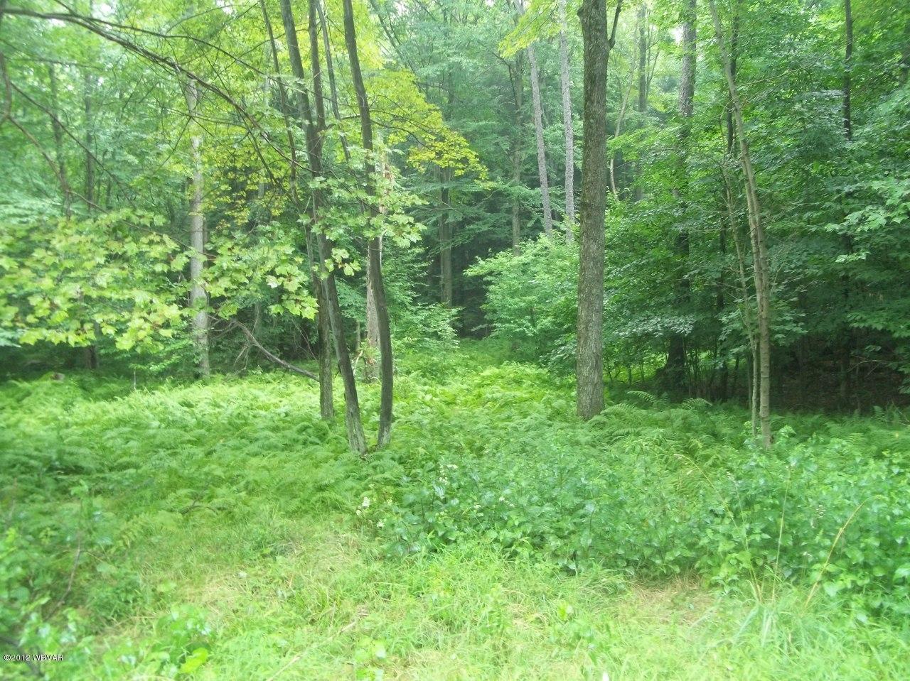 LOT 23 HILARY LANE, Laporte, PA 18626, ,Land,For sale,HILARY,WB-65317