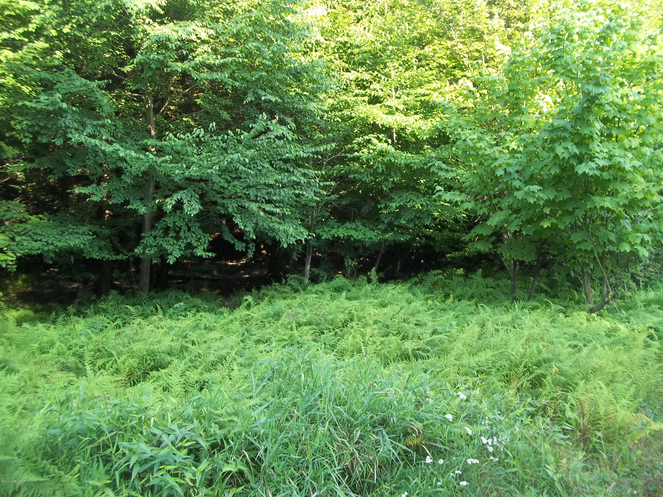 LOT 8 FOREST DRIVE, Laporte, PA 18626, ,Land,For sale,FOREST,WB-71727