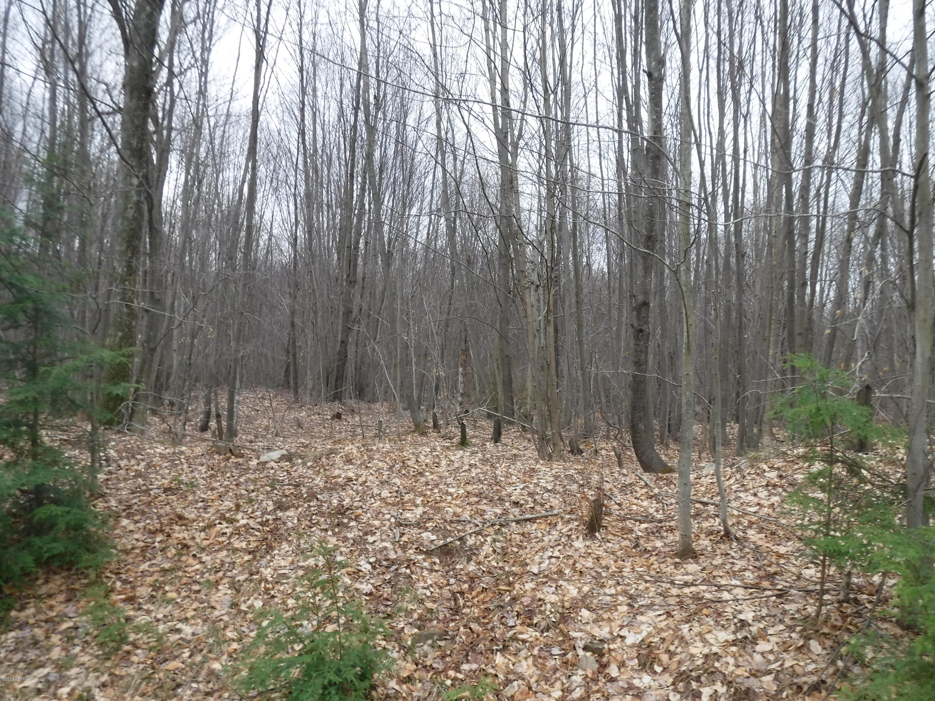 LOT 4 MOLLY STREET, Dushore, PA 18614, ,Land,For sale,MOLLY,WB-79828