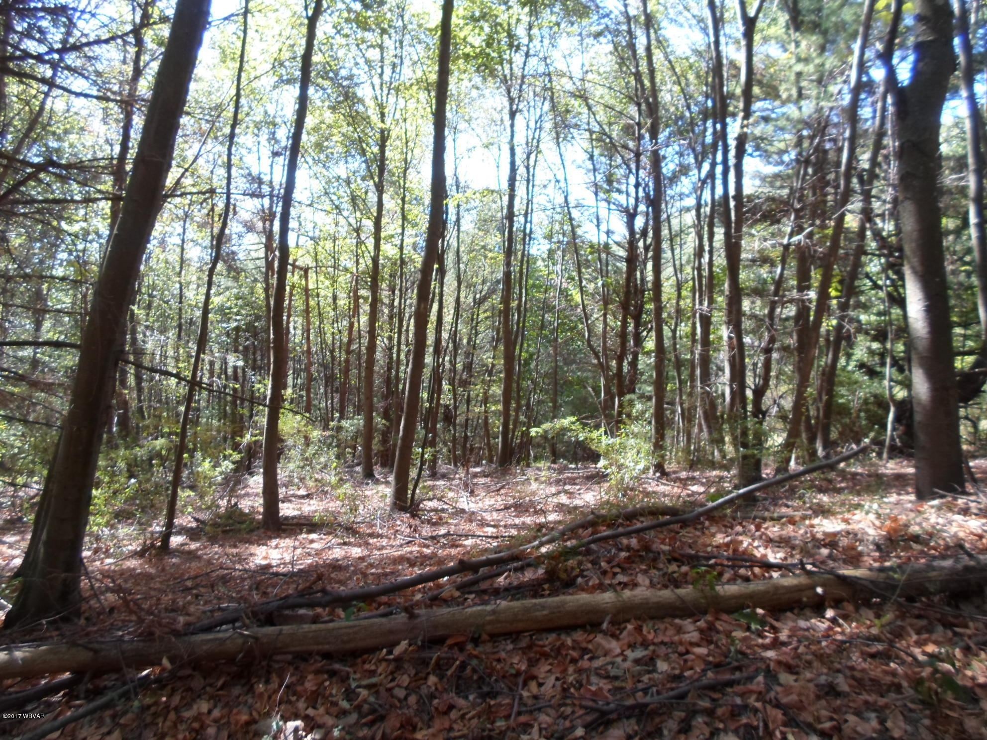 0 FIRST FORK ROAD, Jersey Shore, PA 17740, ,Land,For sale,FIRST FORK,WB-82325