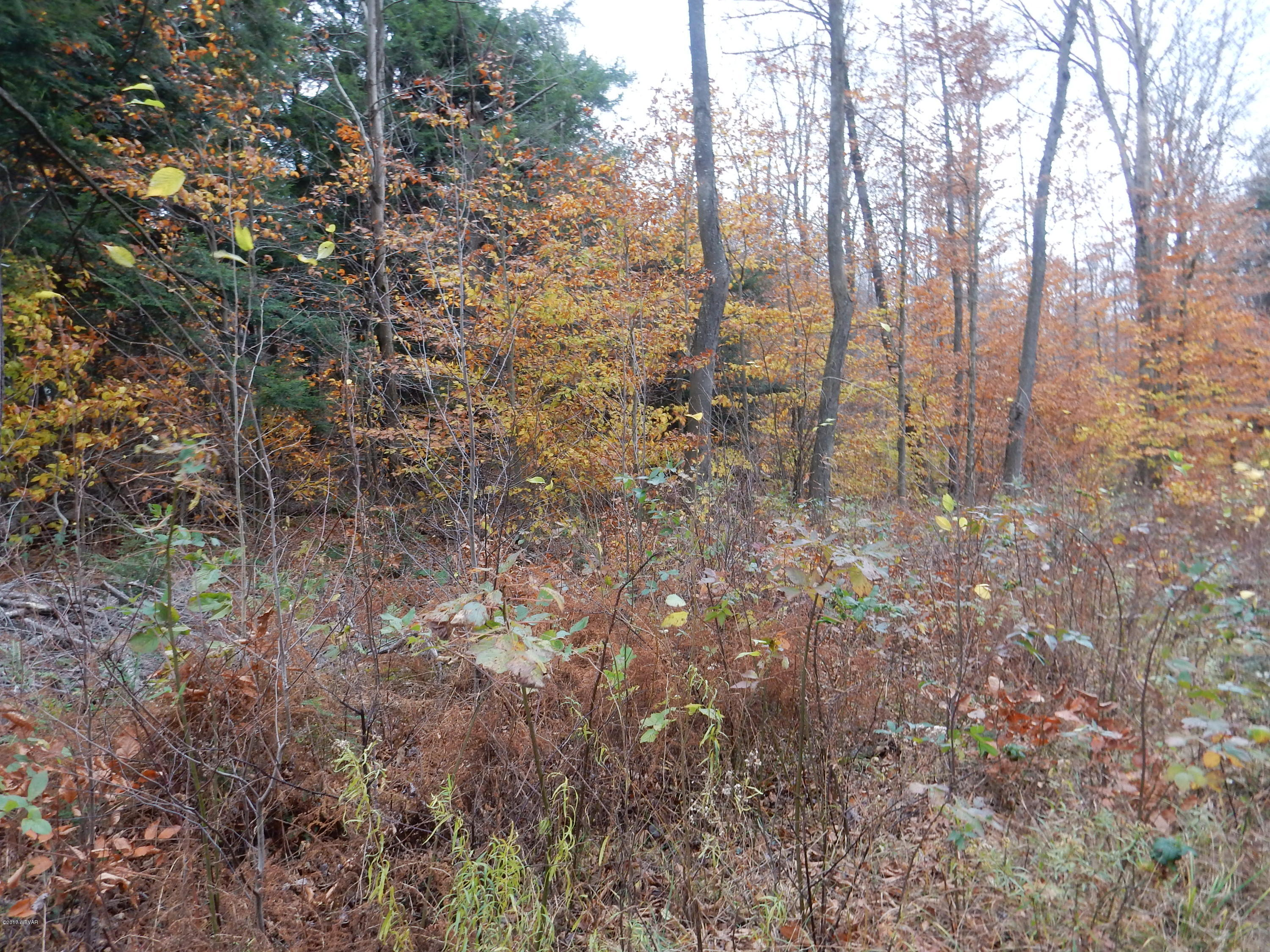 LOT 12 ROCKY RD LANE, Dushore, PA 18614, ,Land,For sale,ROCKY RD,WB-82384