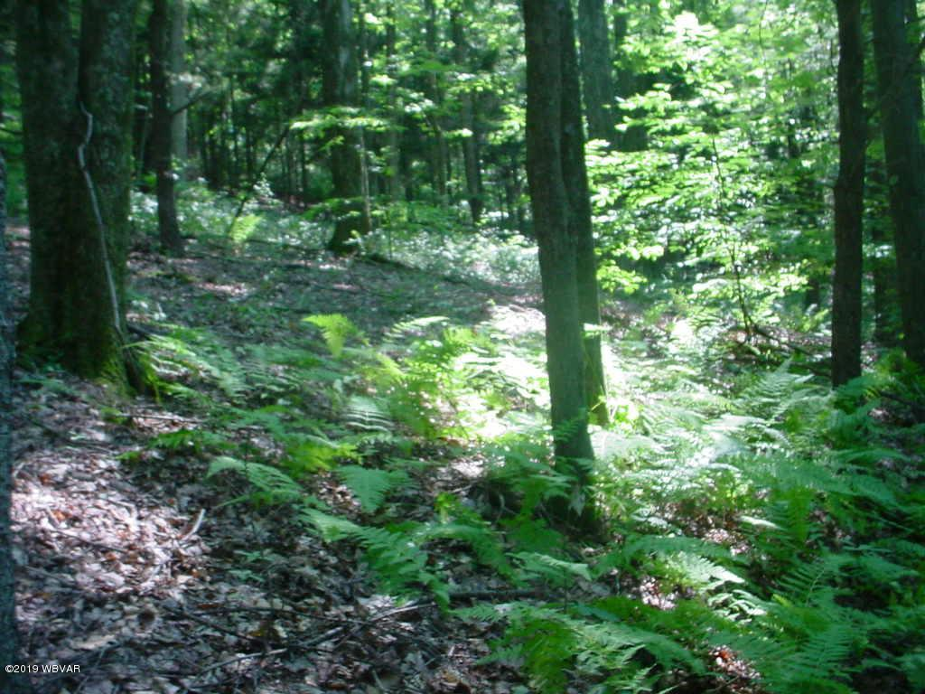 BRUSHY RIDGE ROAD,Montoursville,PA 17754,Land,BRUSHY RIDGE,WB-86218