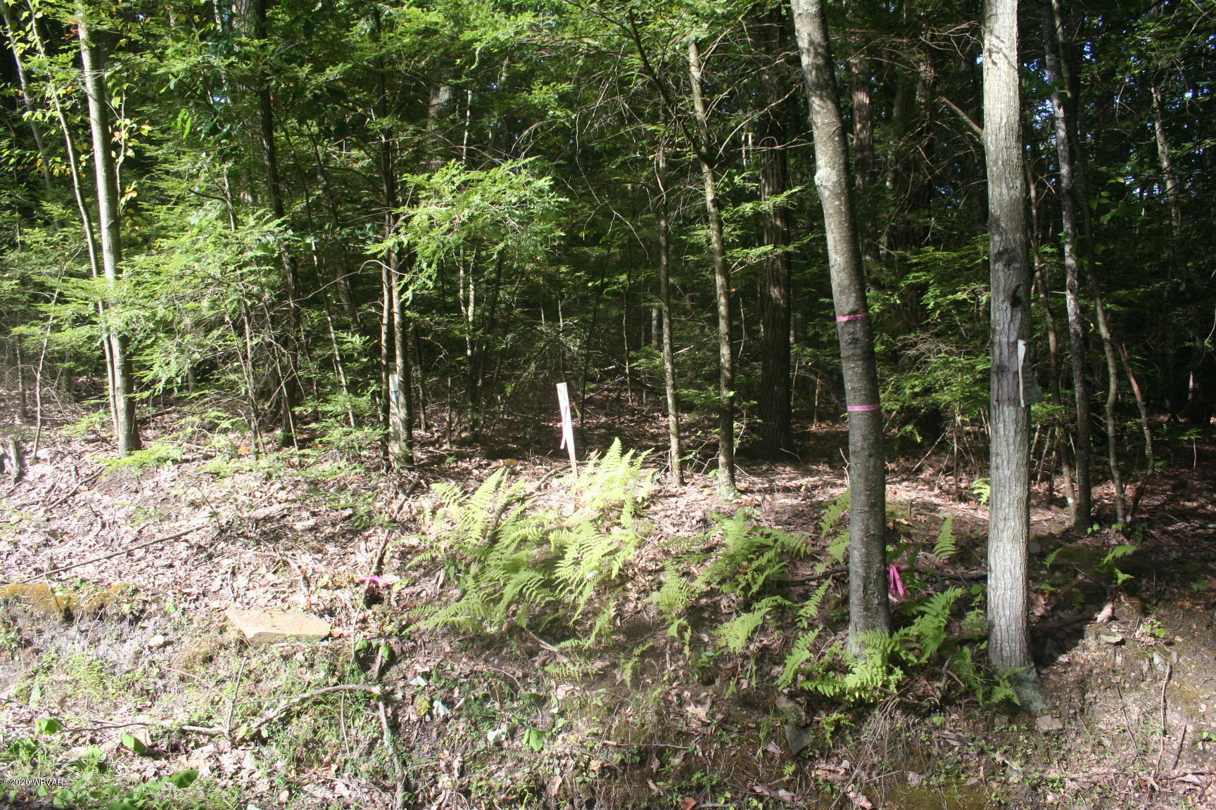 SONES ROAD AND LIBERTY DRIVE, Millville, PA 17846, ,Land,For sale,SONES ROAD AND LIBERTY,WB-91064