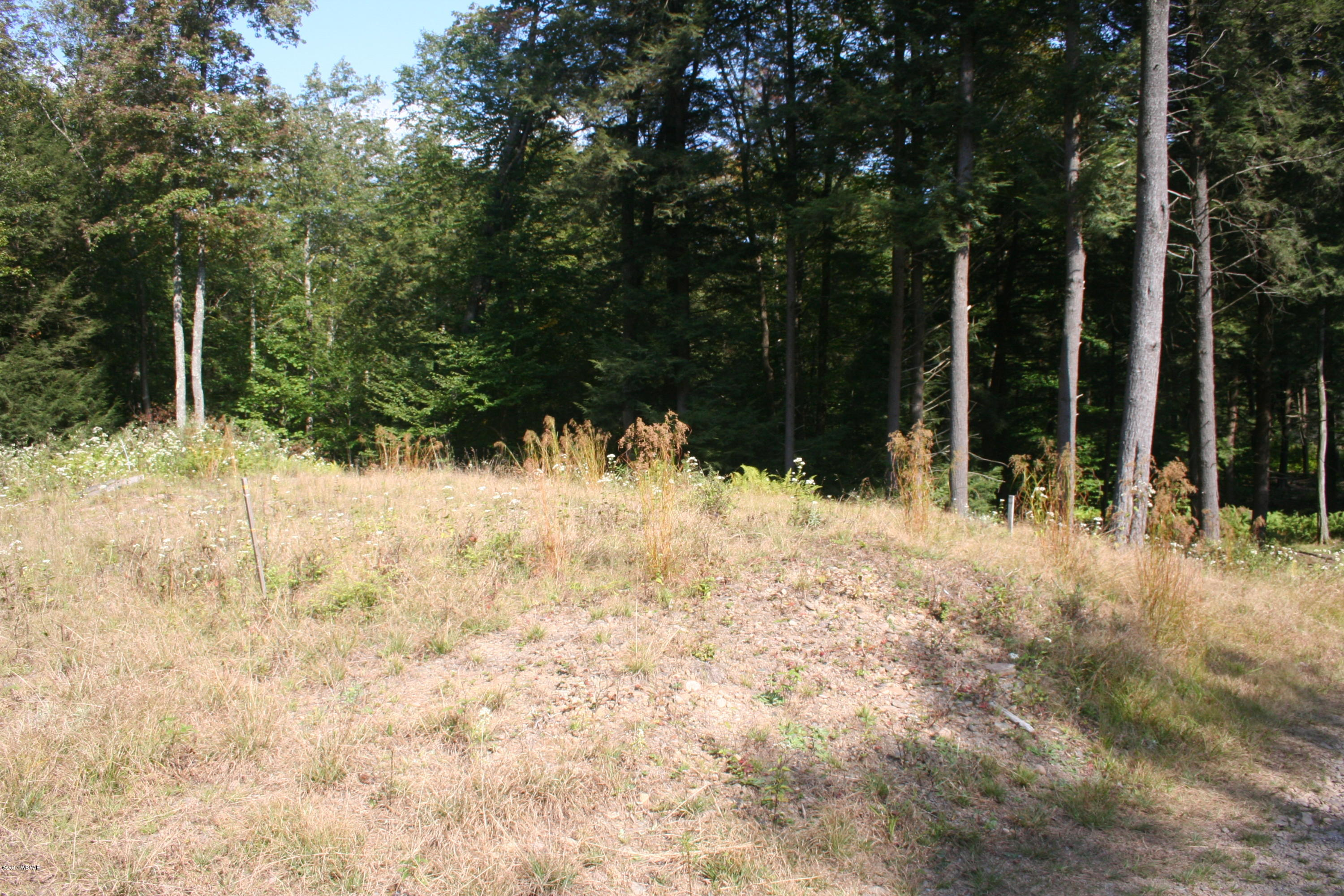 15541 ROUTE 42 HIGHWAY, Eagles Mere, PA 17731, ,Land,For sale,ROUTE 42,WB-91926