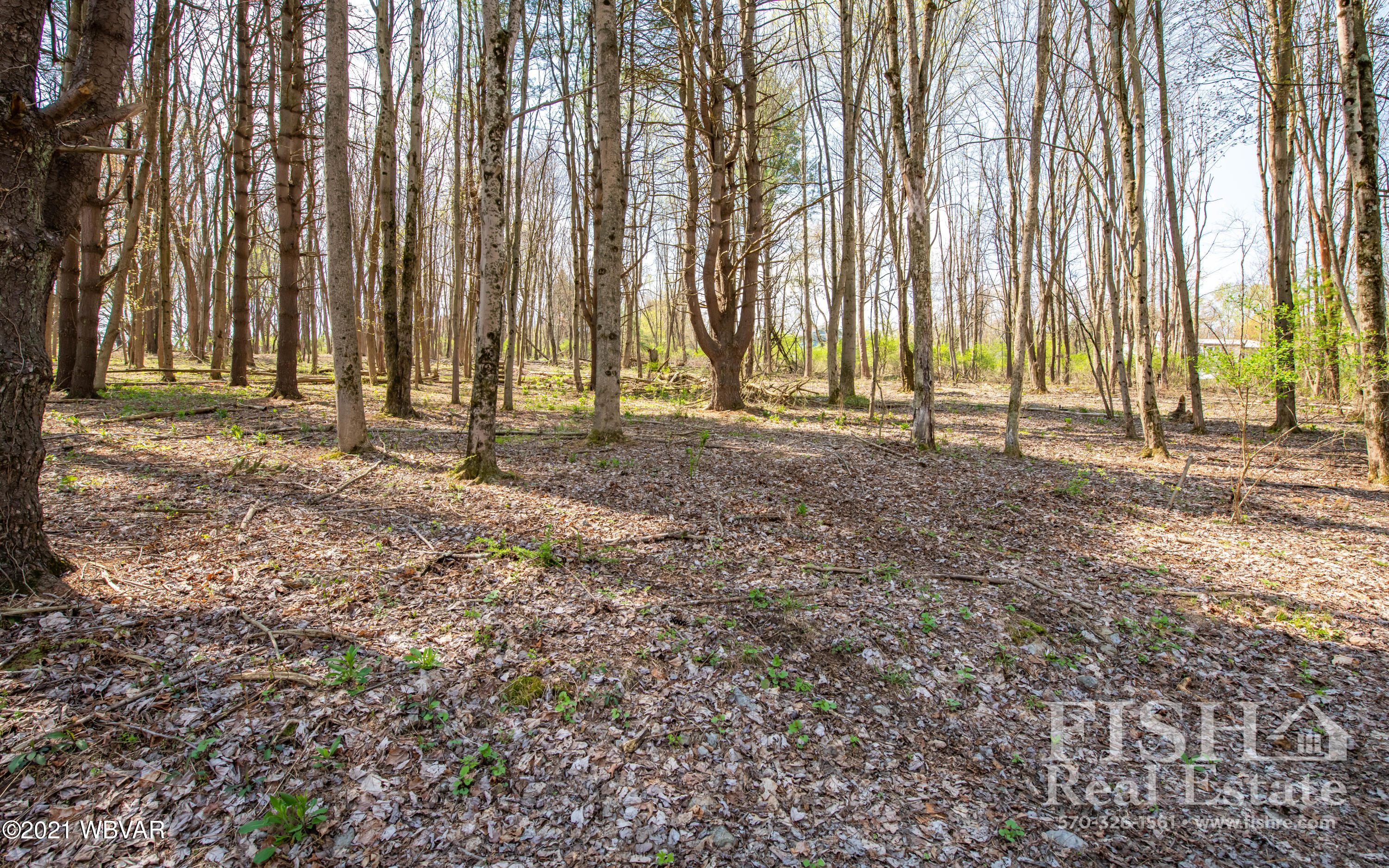 ADELE ROAD, Montoursville, PA 17754, ,Land,For sale,ADELE,WB-92544