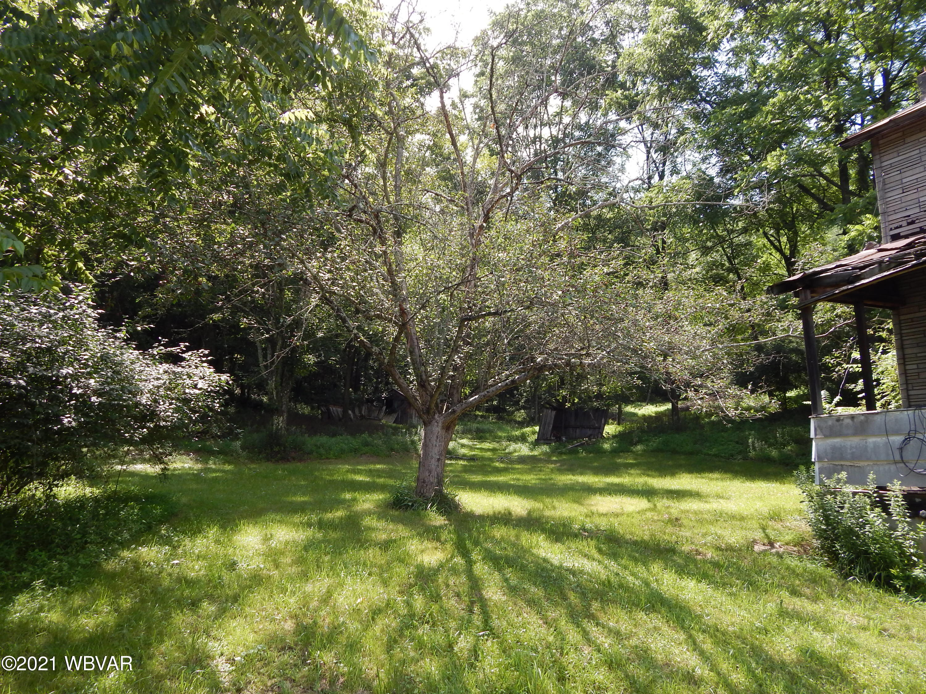 Yard and fruit trees