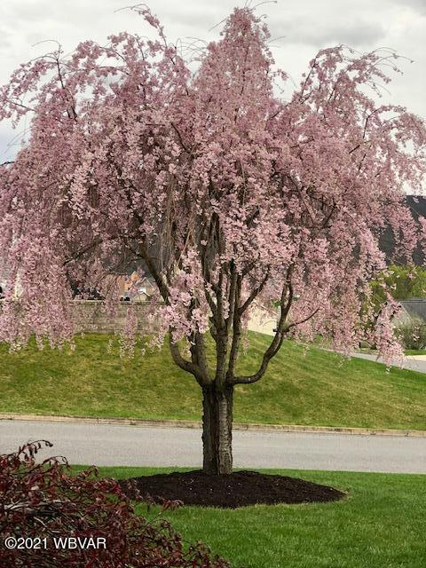 37_cherrytree