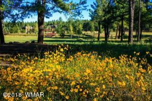 Wildflowers Siera Springs Ranch