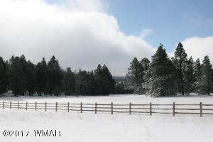 Winter in the meadow