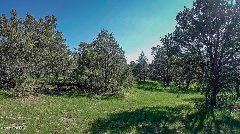 Photo of TRACT E HWY 180 MM 414, Nutrioso, AZ 85932