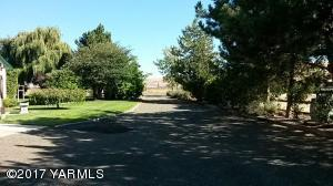 Foliage lined drive