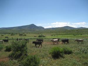Apache Gap Ranch