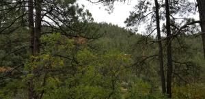 HIGHWAY 126, Jemez Springs, NM 87025