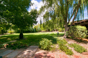 Back yard w/weeping willow