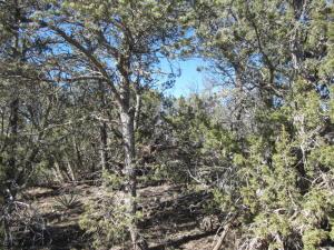 25 Jon Kitsch Road, Tijeras, NM 87059