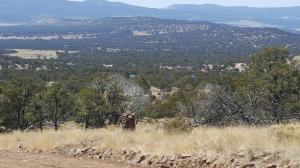 285 Northern Trail, Datil, NM 87821