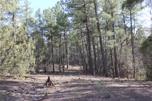 85 Carolino Canyon Road, Tijeras, NM 87059
