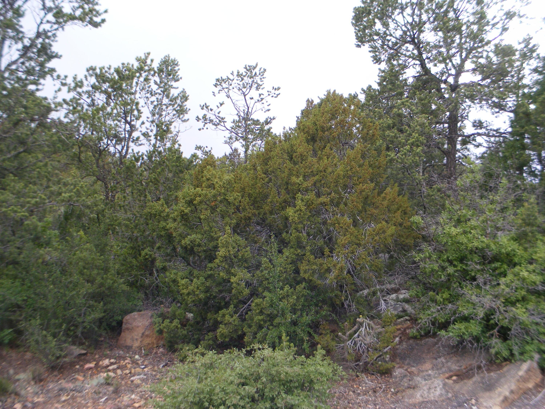 9 Dalton Trail