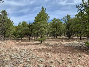 162 Homestead Subdivision Trail, Datil, NM 87821