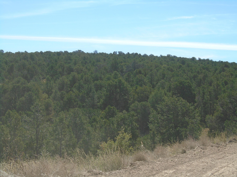 Ridge 5