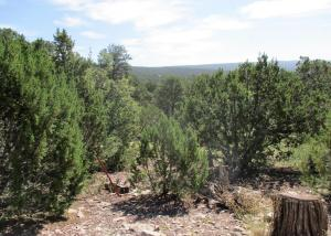 Lots 14&15 Fox Road, Ramah, NM 87321