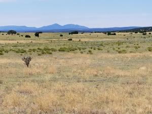 510 Lexco Road, Moriarty, NM 87035
