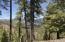 Cielo Vista Loop, Jemez Springs, NM 87025