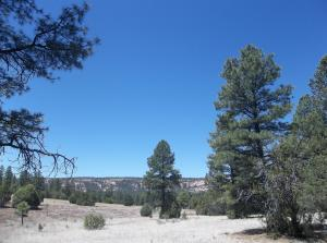 Lots 15-16 Black Bear, Ramah, NM 87321