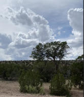 Forest Rd 123-Burcito Rd. Road, Magdalena, NM 87825