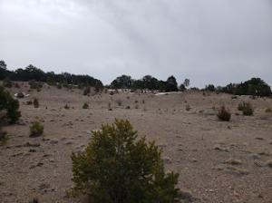 Pinion Heights RD, Sandia Park, NM 87047