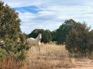 40 GLORY Road, Tijeras, NM 87059