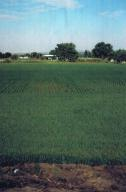 4.05 Acres of Irrigated Land in Adelino. Partial