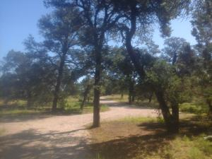 Lot 179 Ranch Dr - Pine Meadows Unit 3, Ramah, NM 87321