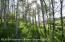 aspen groves on ranch