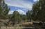 154 Crescent Lane, Glenwood Springs, CO 81601